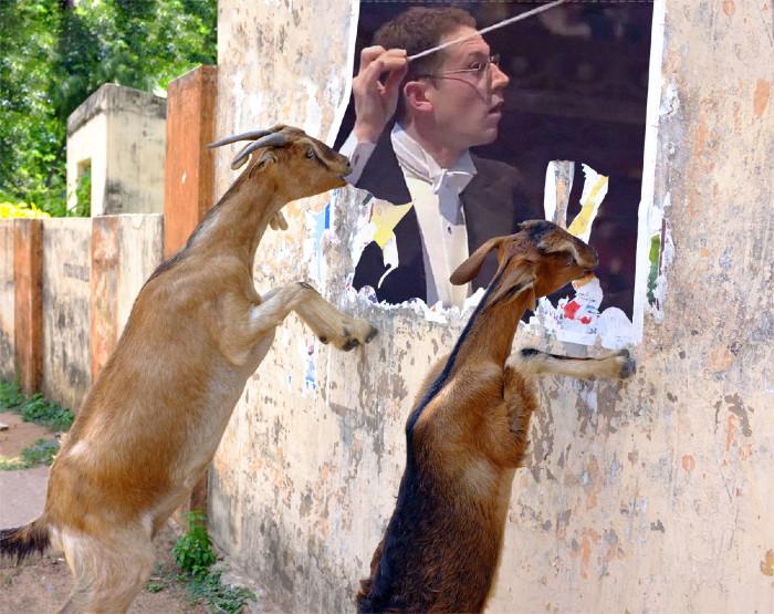 John Wilson Eaten by Goats